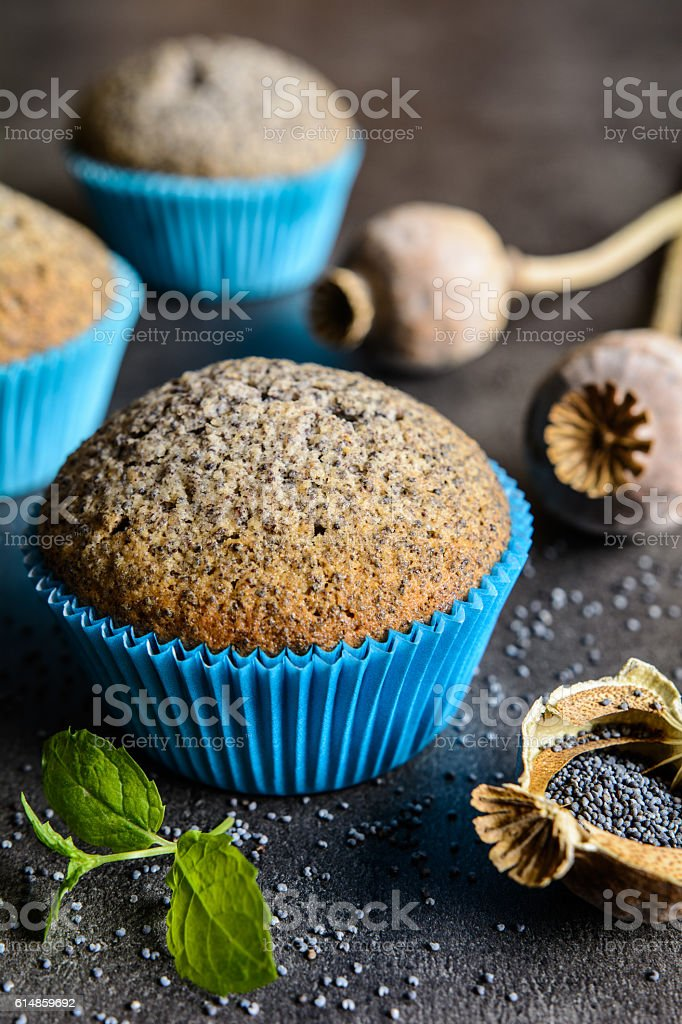 Poppy seeds muffins stock photo