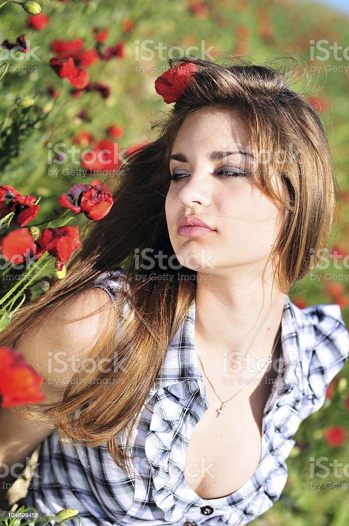 poppy tenderness royalty-free stock photo