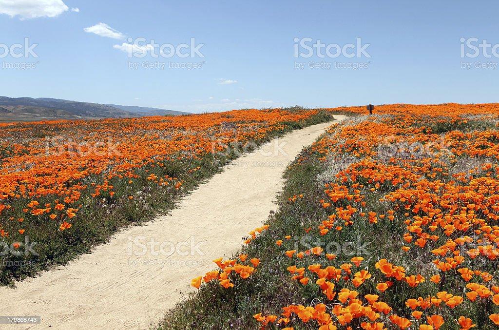 Poppy Trail stock photo