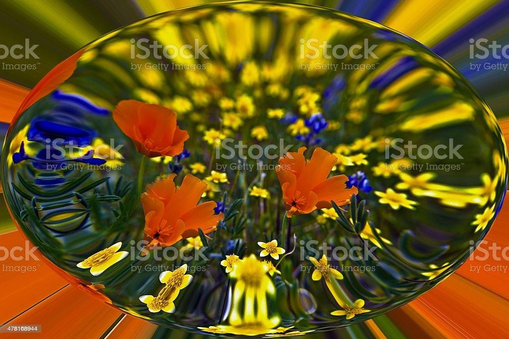 Poppys in a bubble. stock photo