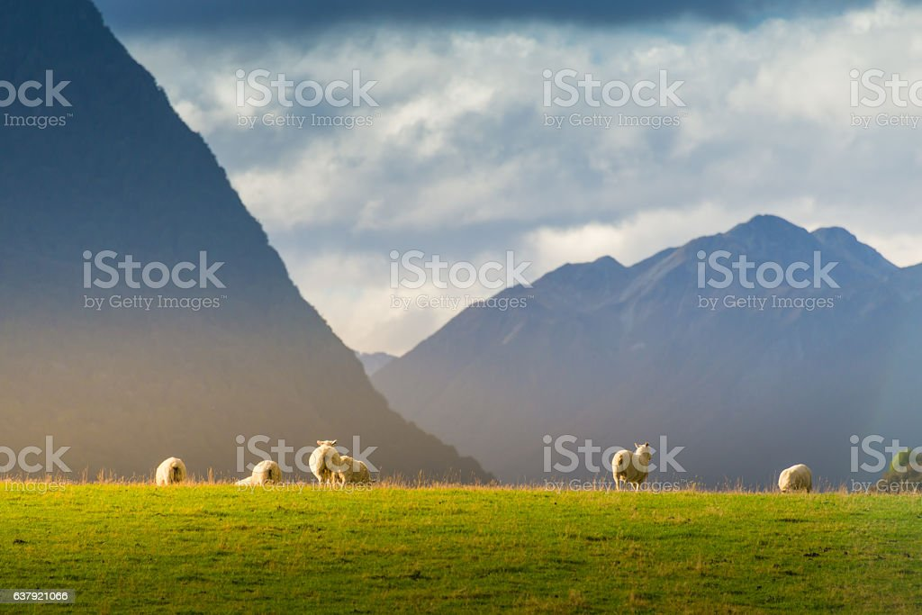 Popular view of south island New Zealand stock photo
