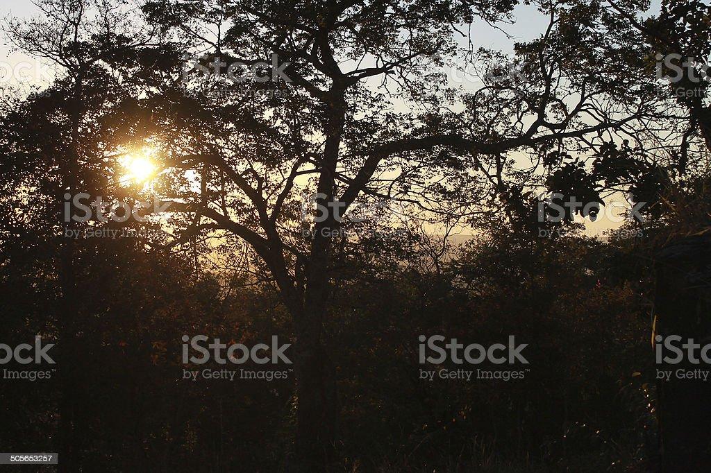 Por do sol no cerrado stock photo