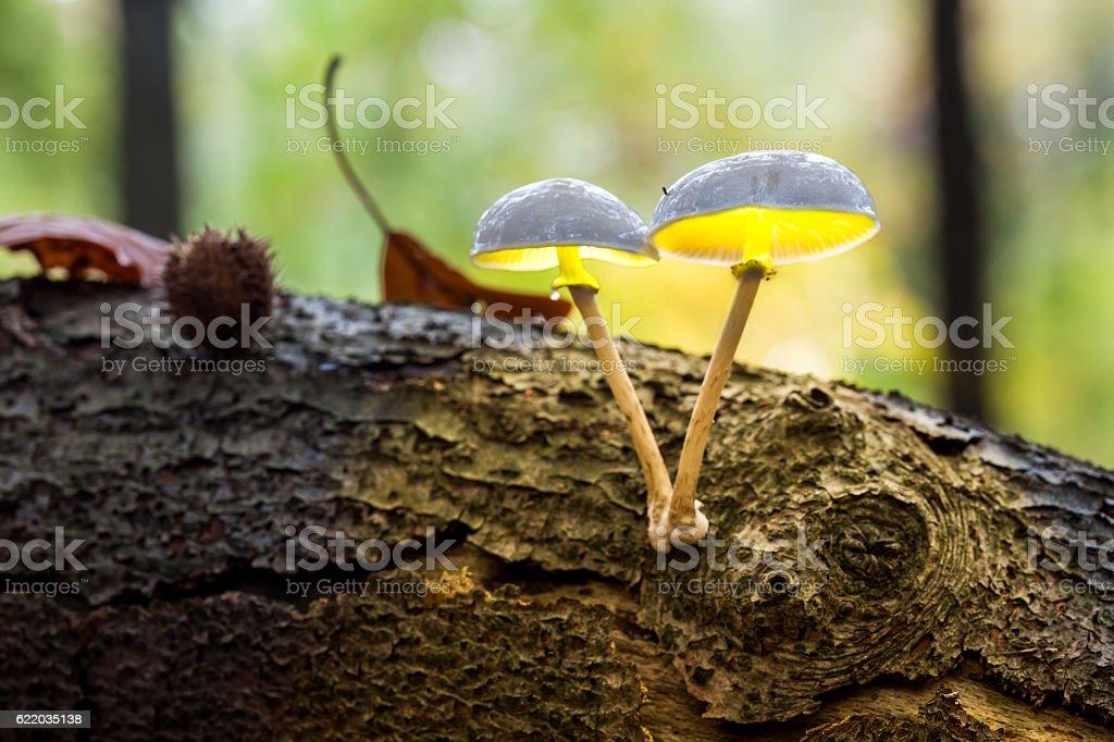 porcelain fungus stock photo
