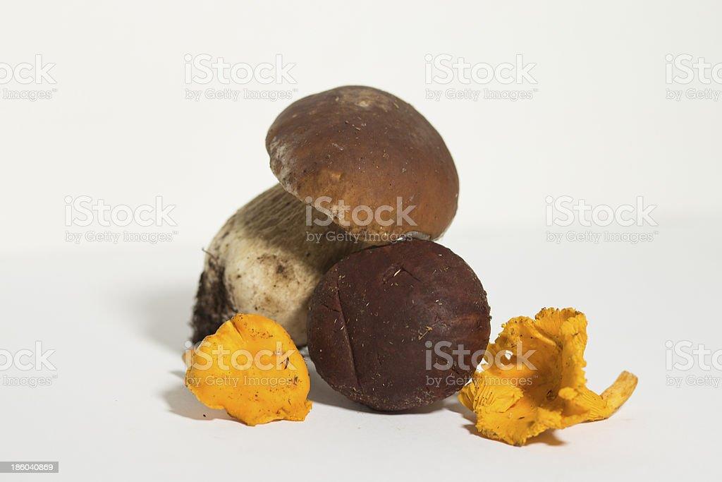 porcini and finferli mushroom royalty-free stock photo