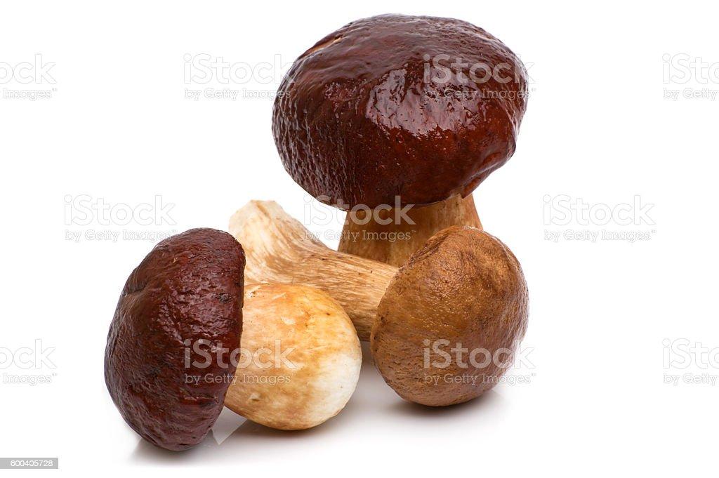 Porcini Mushroom with Rosemary isolated on white background stock photo