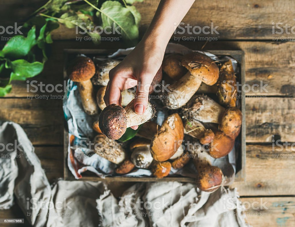 Porcini mushrooms in wooden tray and woman's hand holding stock photo