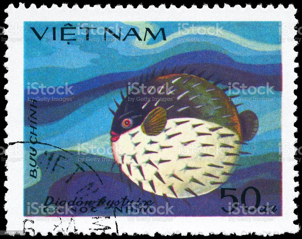 Porcupinefish stock photo