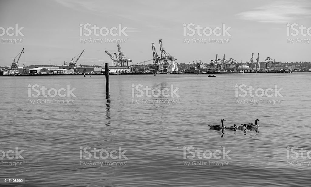 Port Cranes 2 stock photo