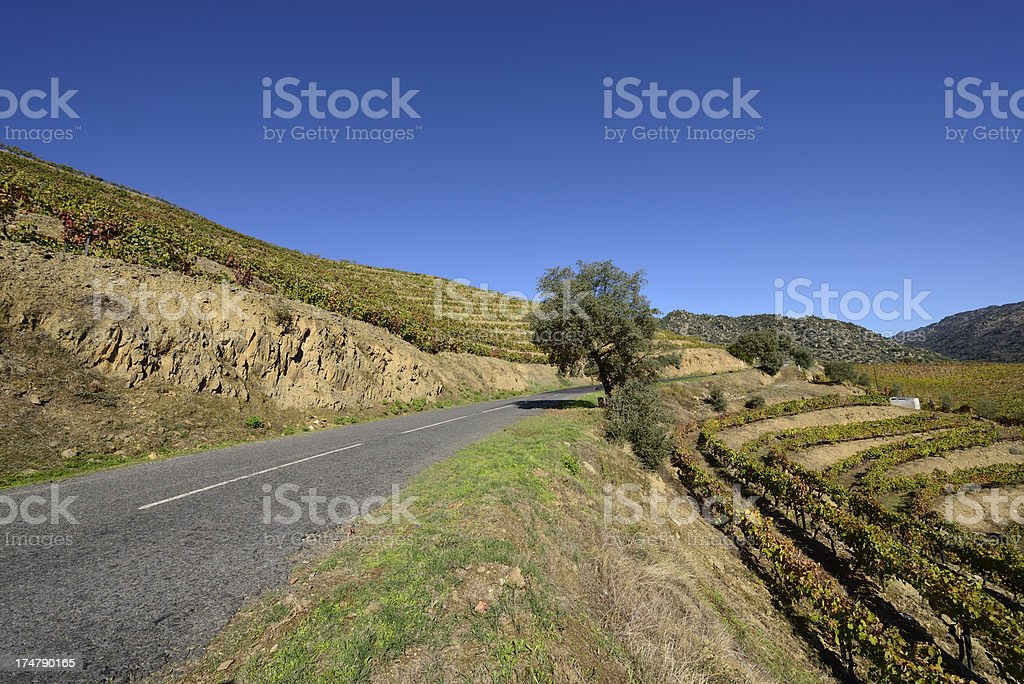 Port vineyards in Autumn royalty-free stock photo