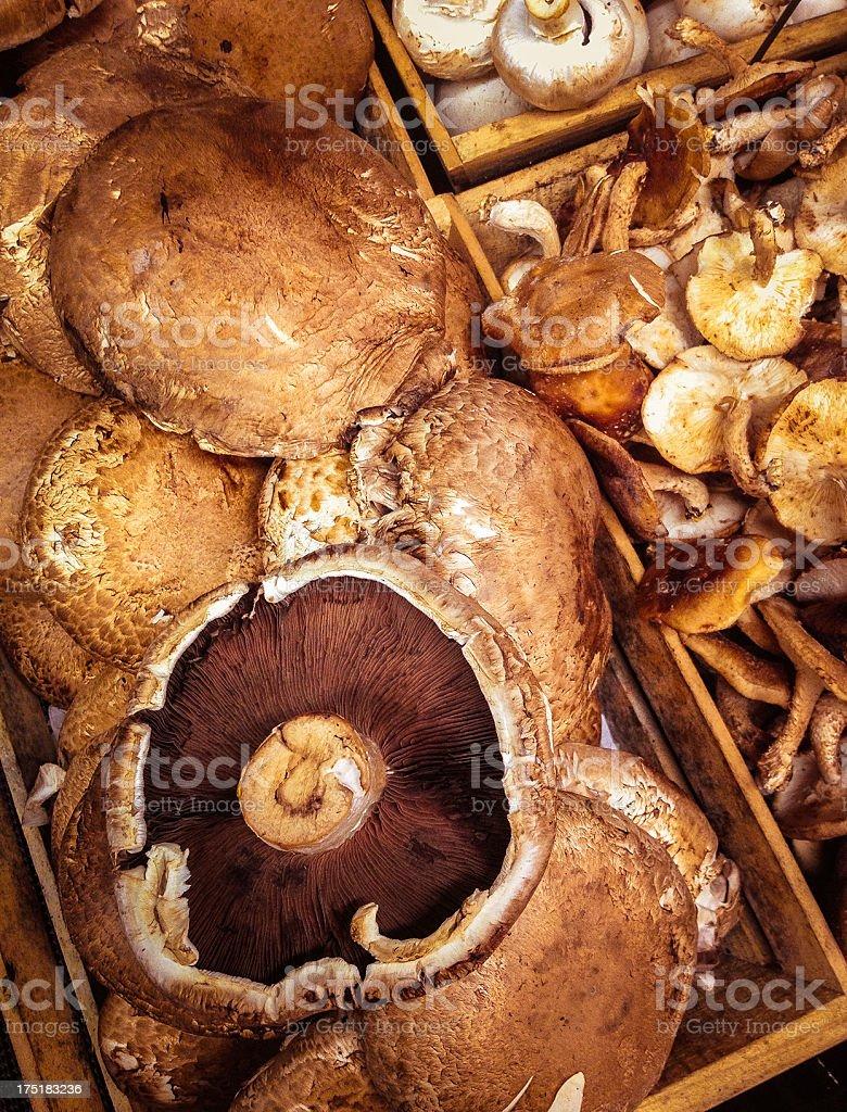 Portabella and Shiitake Mushrooms stock photo