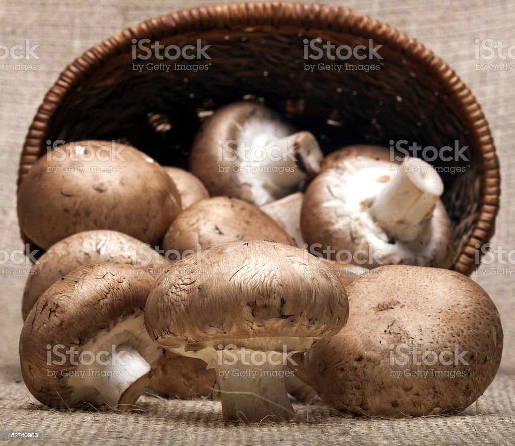 Portabello Mushrooms royalty-free stock photo