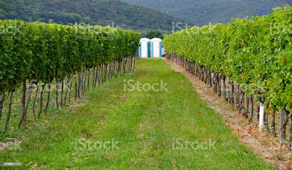 portable toilets in a vineyard stock photo