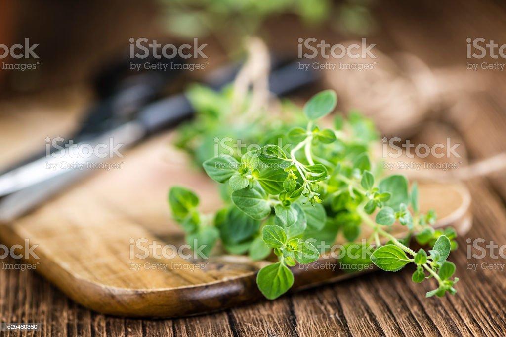 Portion of fresh Oregano stock photo