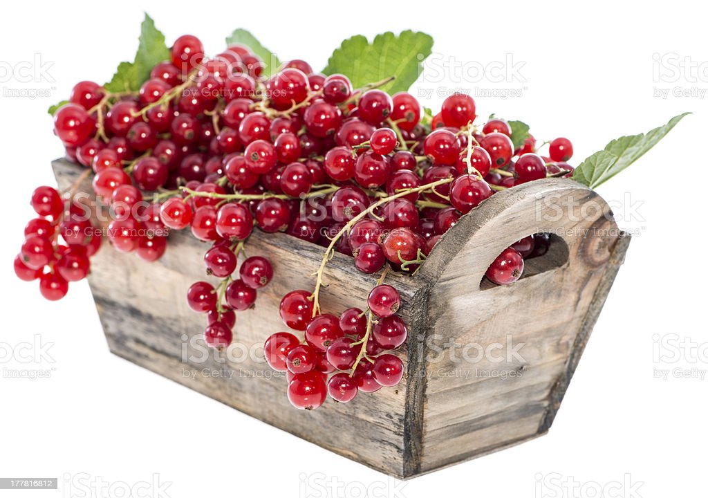 Portion of Red Currants (Isolated) royalty-free stock photo