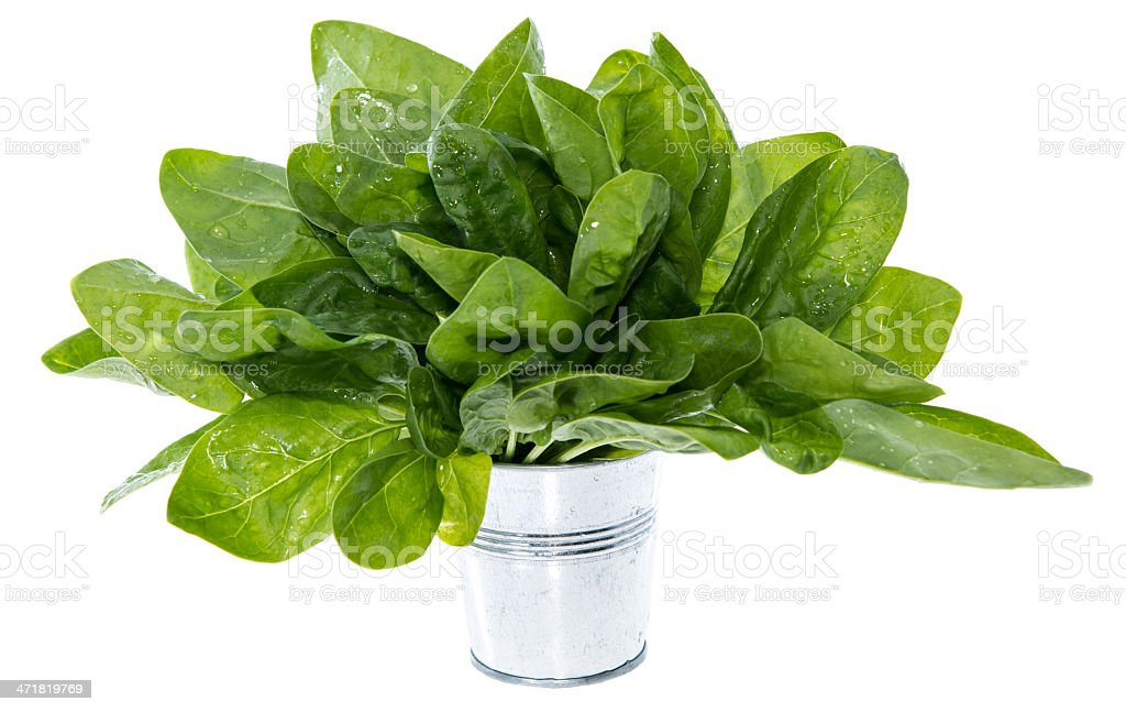 Portion of Spinach on white royalty-free stock photo