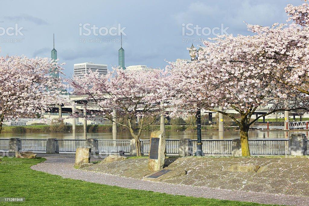 Portland Cherry Tree Blossom Waterfront. stock photo