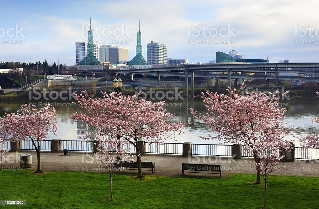 Portland Cherry Tree Waterfront. stock photo