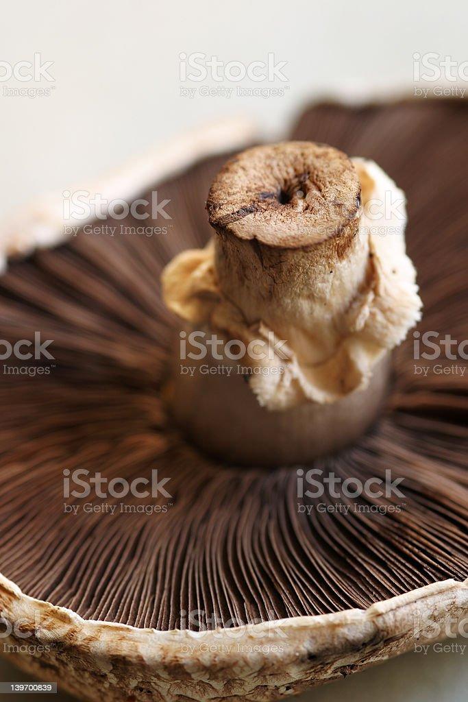 Portobello Mushroom royalty-free stock photo