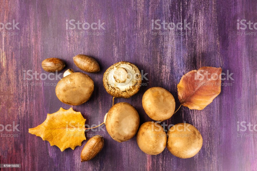 Portobello mushrooms with autumn leaves and pecan nuts stock photo