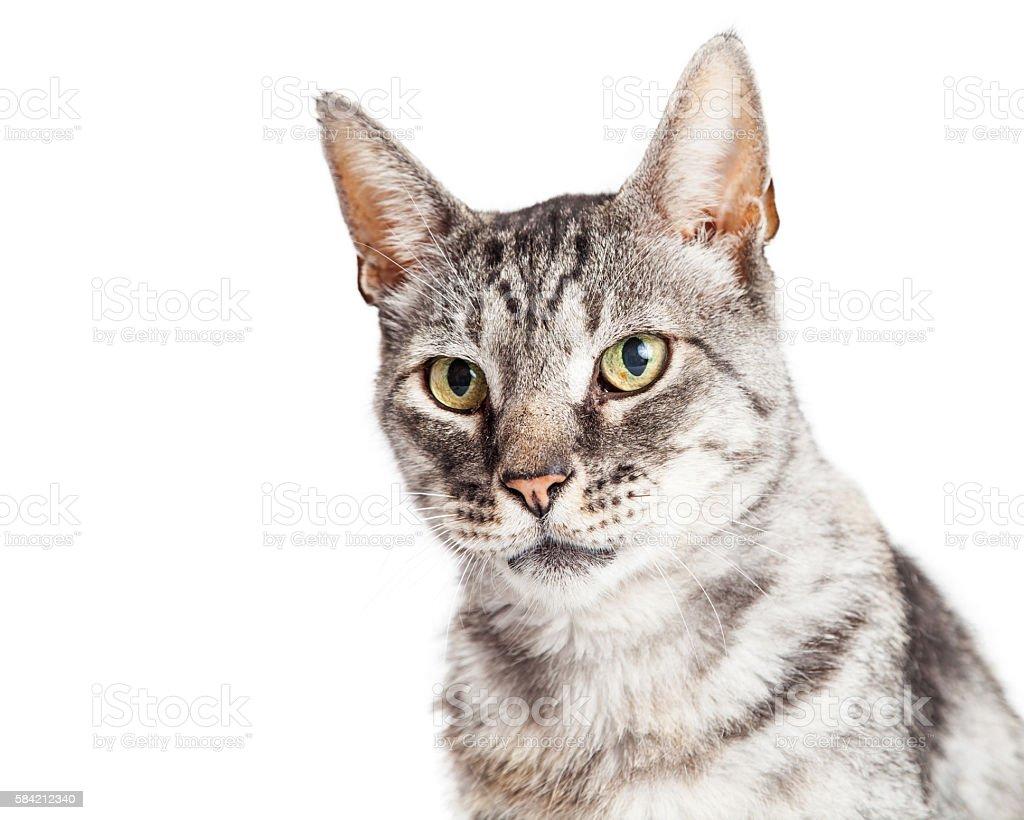 Portrait Beautiful Grey Striped Cat stock photo