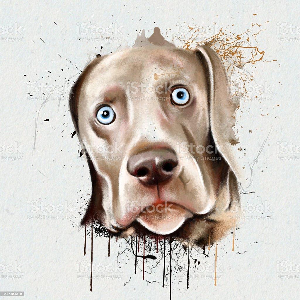 portrait dog closeup on a white background stock photo