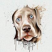 portrait dog closeup on a white background