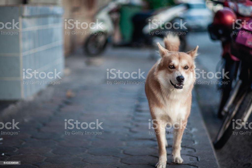 Portrait dog. stock photo