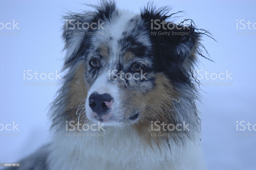 Portrait in blue royalty-free stock photo