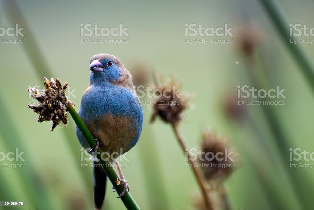 Portrait of a beautiful, African, small bird of unusual color sitting on a branch stock photo