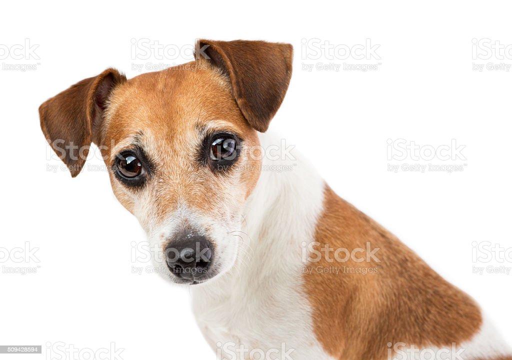 Portrait of a beautiful dog stock photo