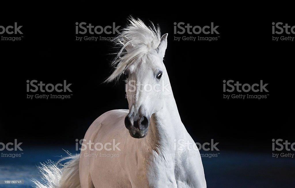 Portrait of a beautiful horse stock photo