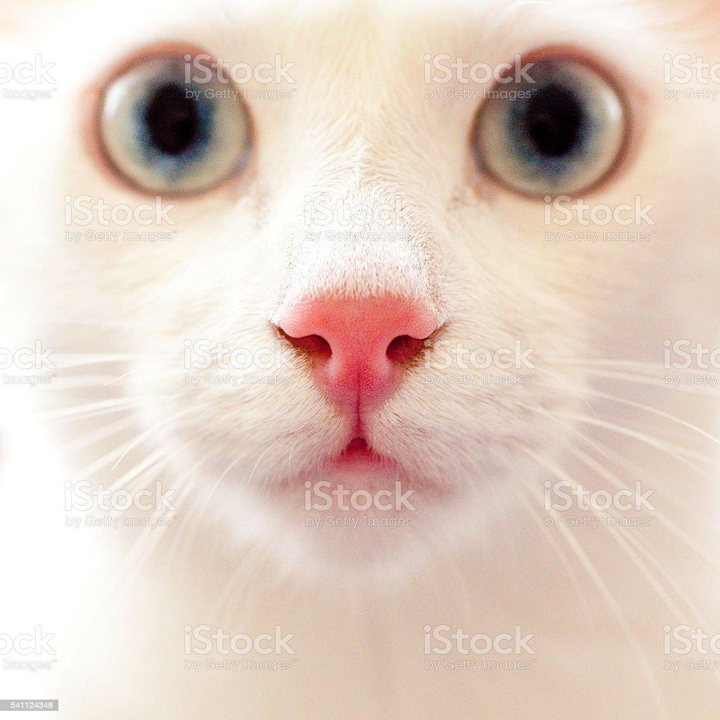 Portrait of a beautiful white cat. Close-up stock photo