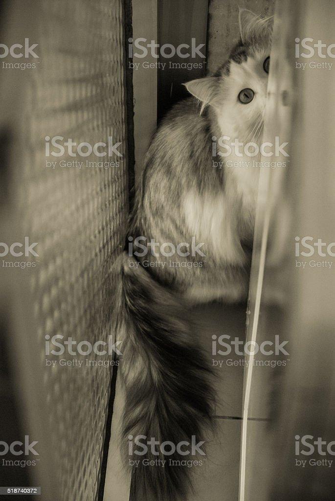Un beau Portrait de chat blanc photo libre de droits