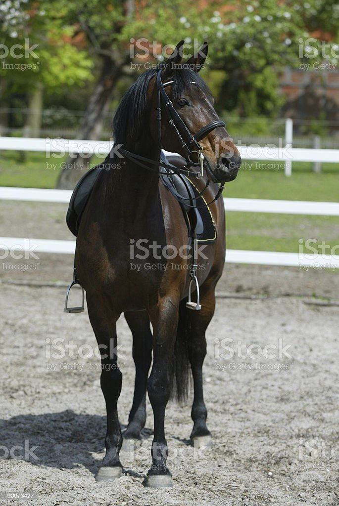 Portrait of a brown horse royalty-free stock photo