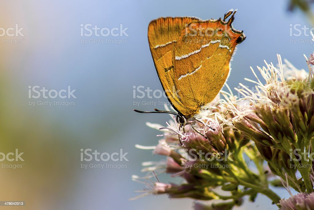 Portrait of a butterfly royalty-free stock photo