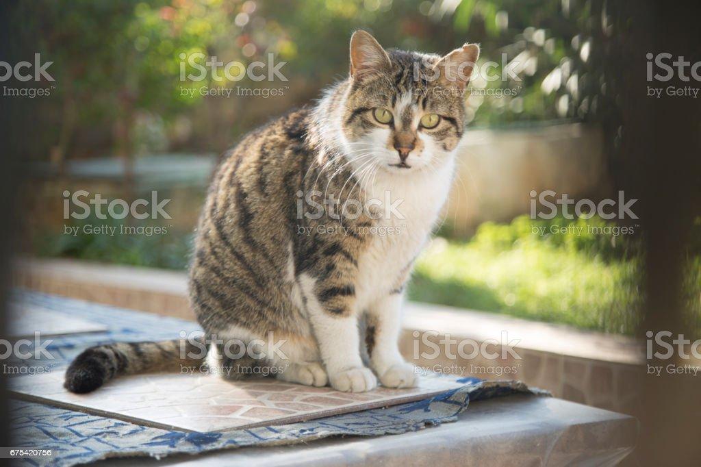 Portrait of a Cat stock photo