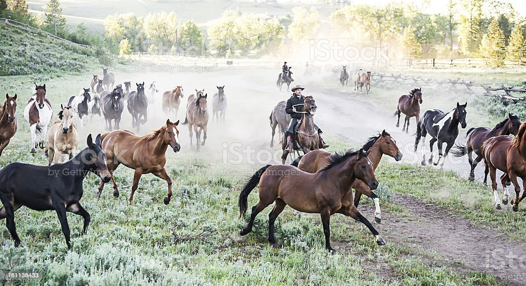 Portrait  of a Cowboy Round Up on Dude Ranch stock photo