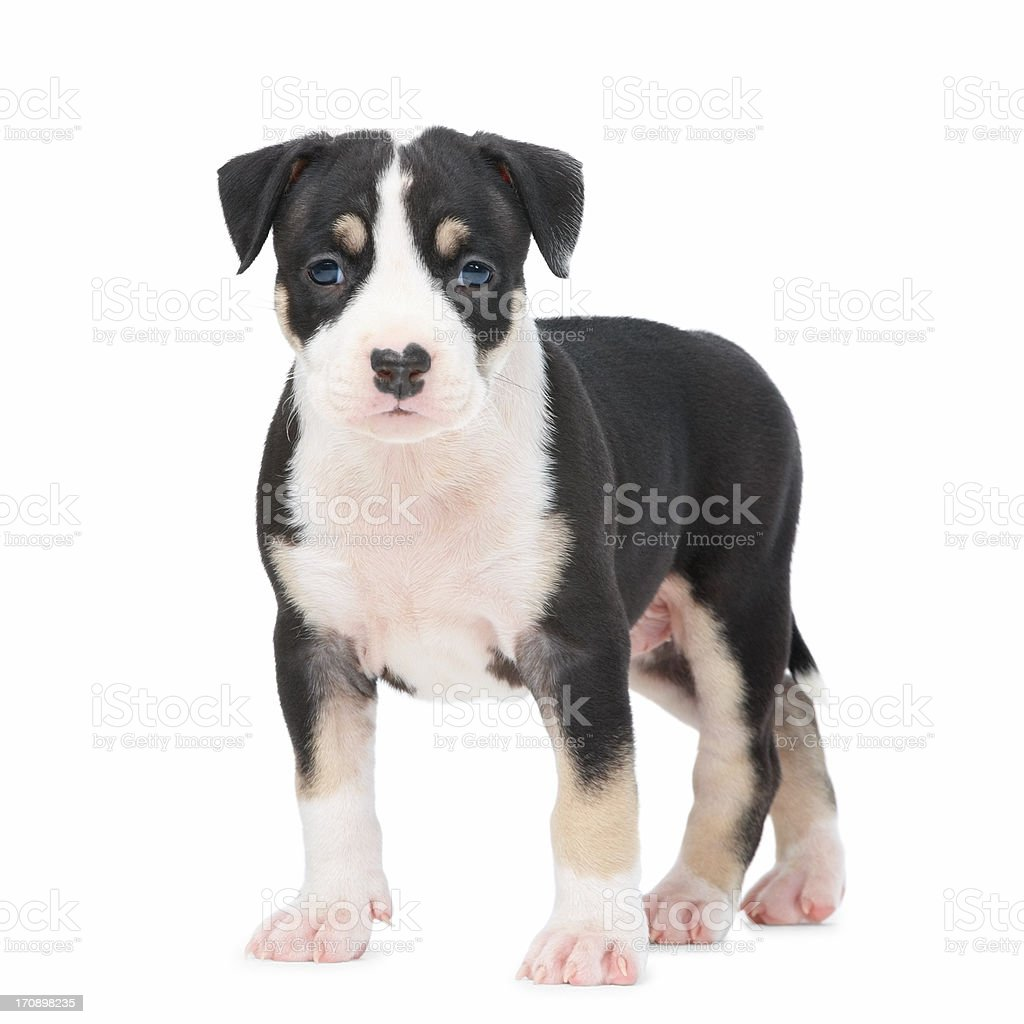 Portrait of a cute puppy dog royalty-free stock photo