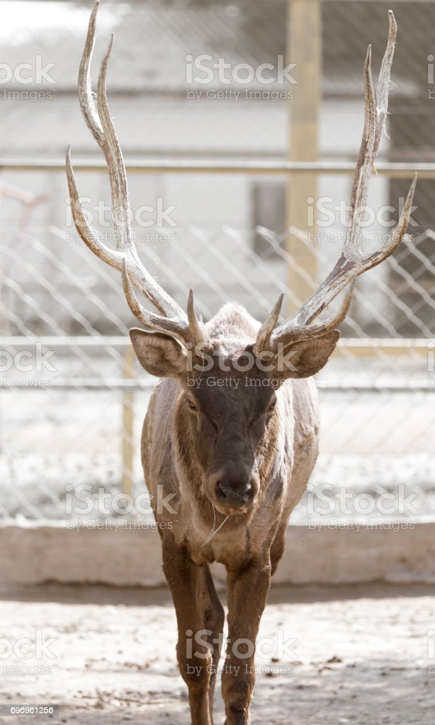 Portrait of a deer in nature stock photo