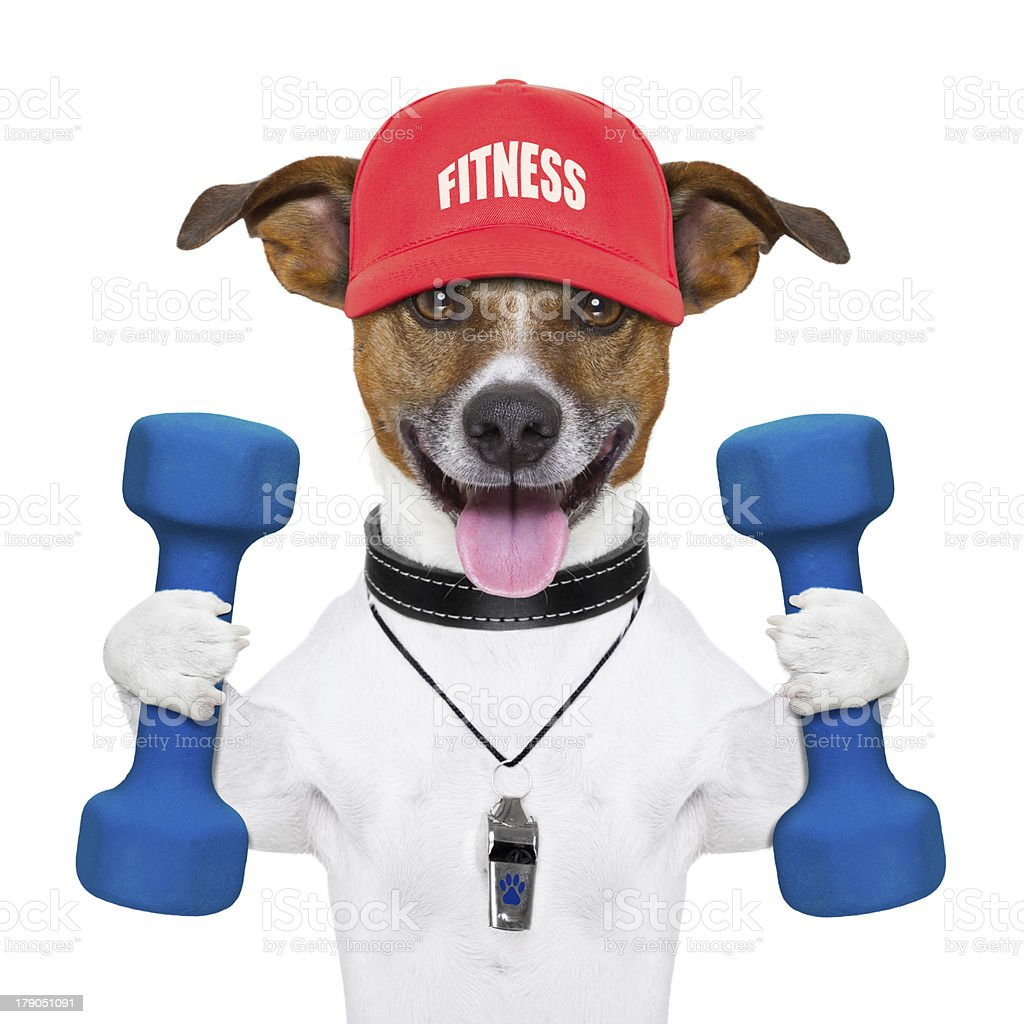 Portrait of a dog decked in fitness equipment stock photo