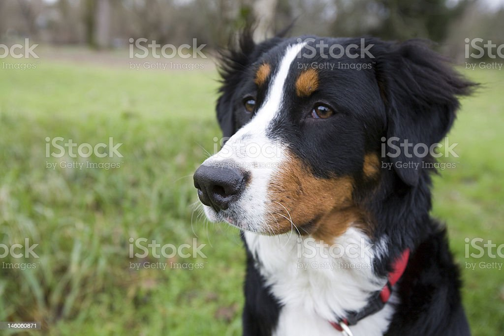 Portrait of a dog in the park. royalty-free stock photo
