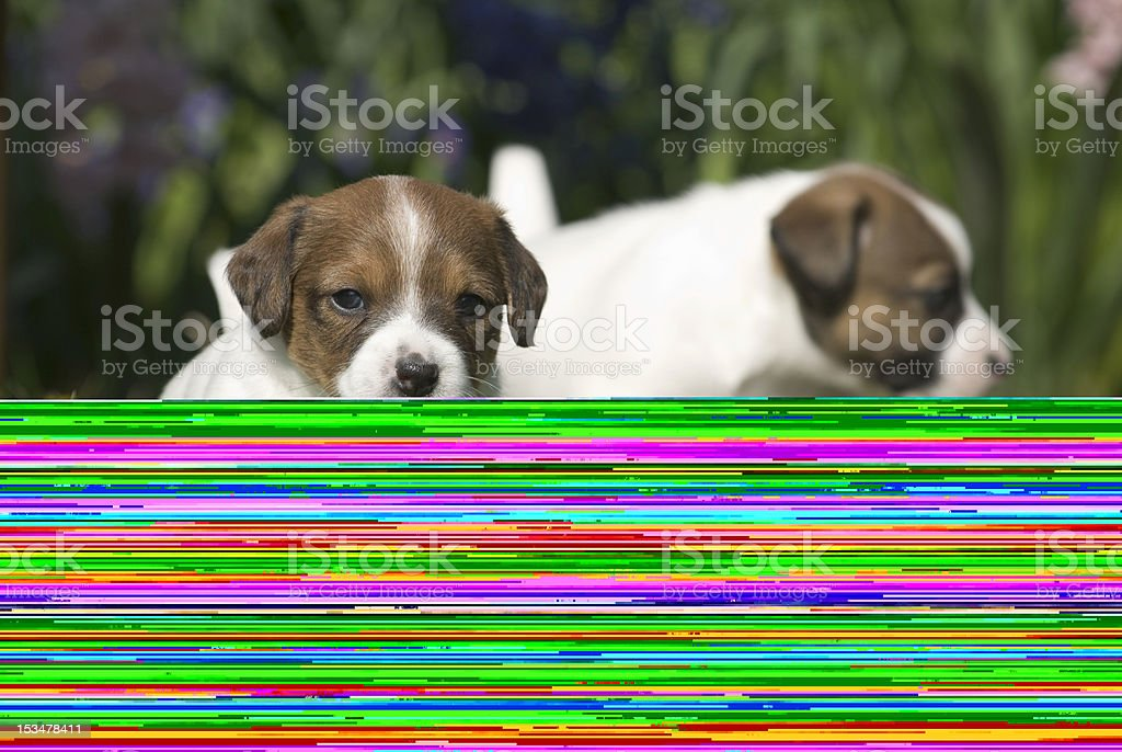 portrait of a dog royalty-free stock photo