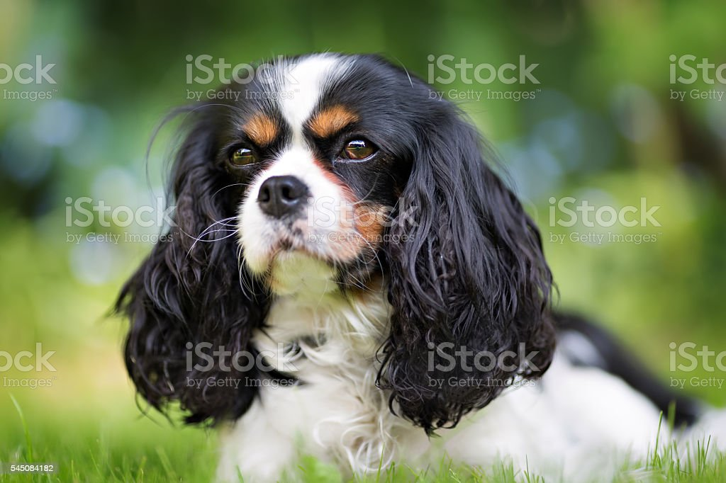 portrait of a dog stock photo