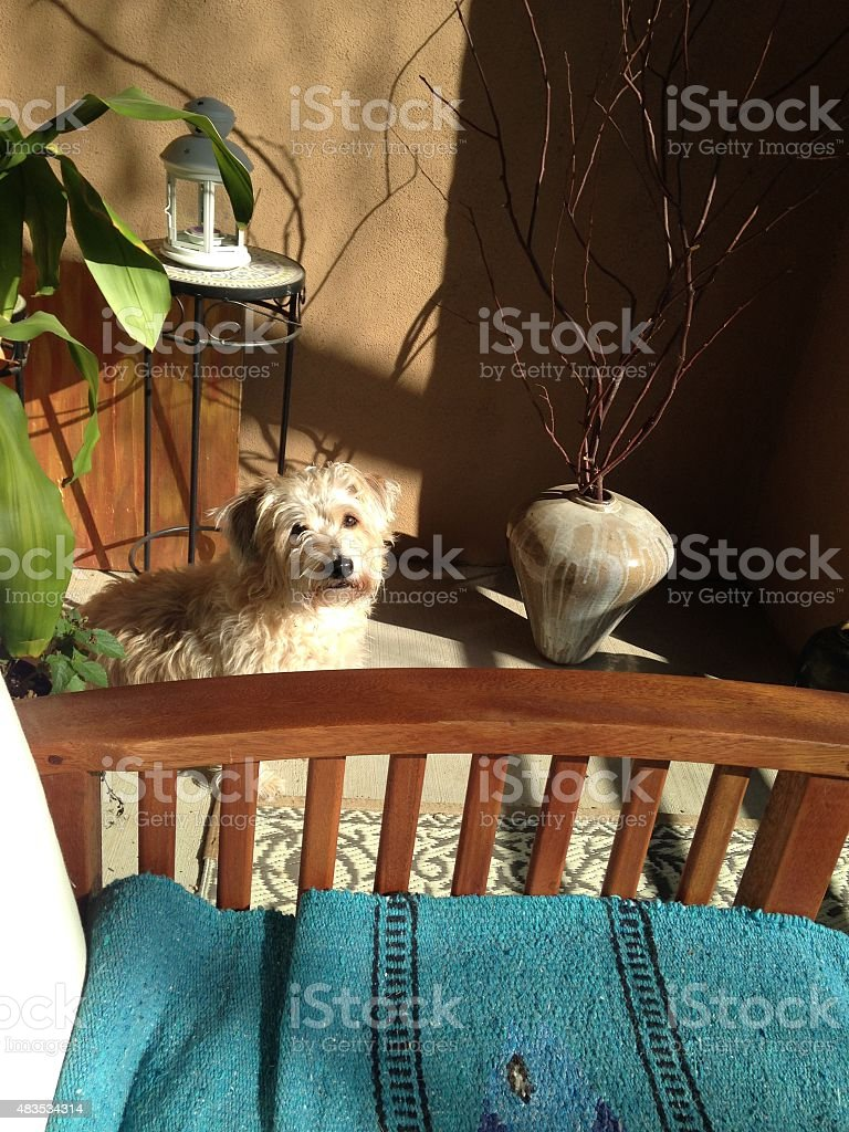 Portrait of a dog sitting on the patio royalty-free stock photo
