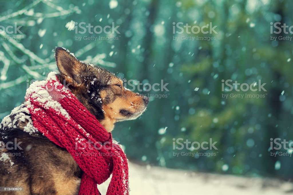 Portrait of a dog with scarf tied around the neck stock photo