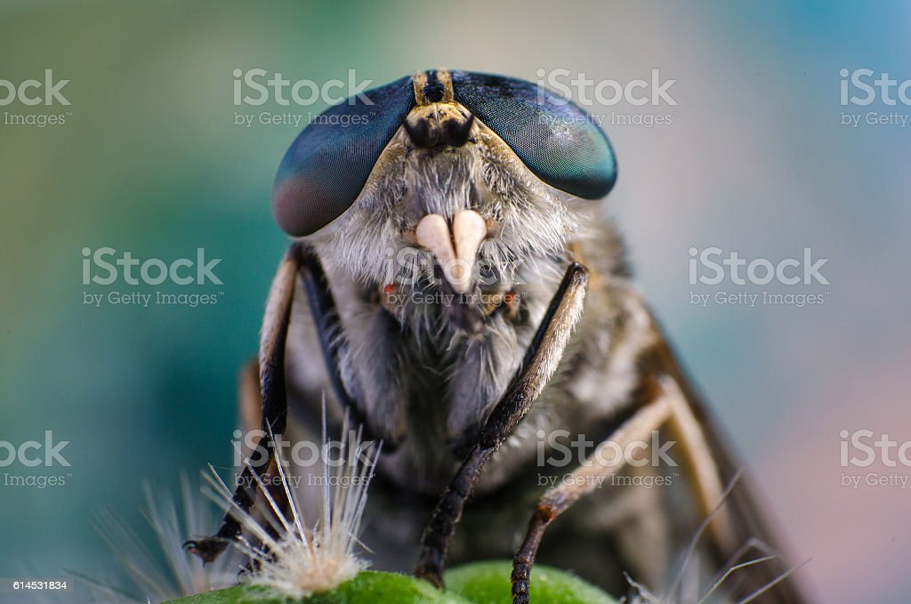 Portrait of a fly close up stock photo