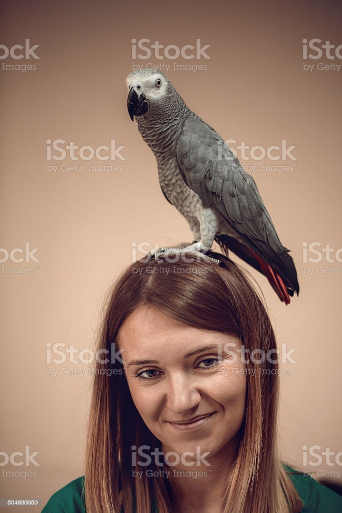 Portrait of a gray parrot on woman's head. stock photo