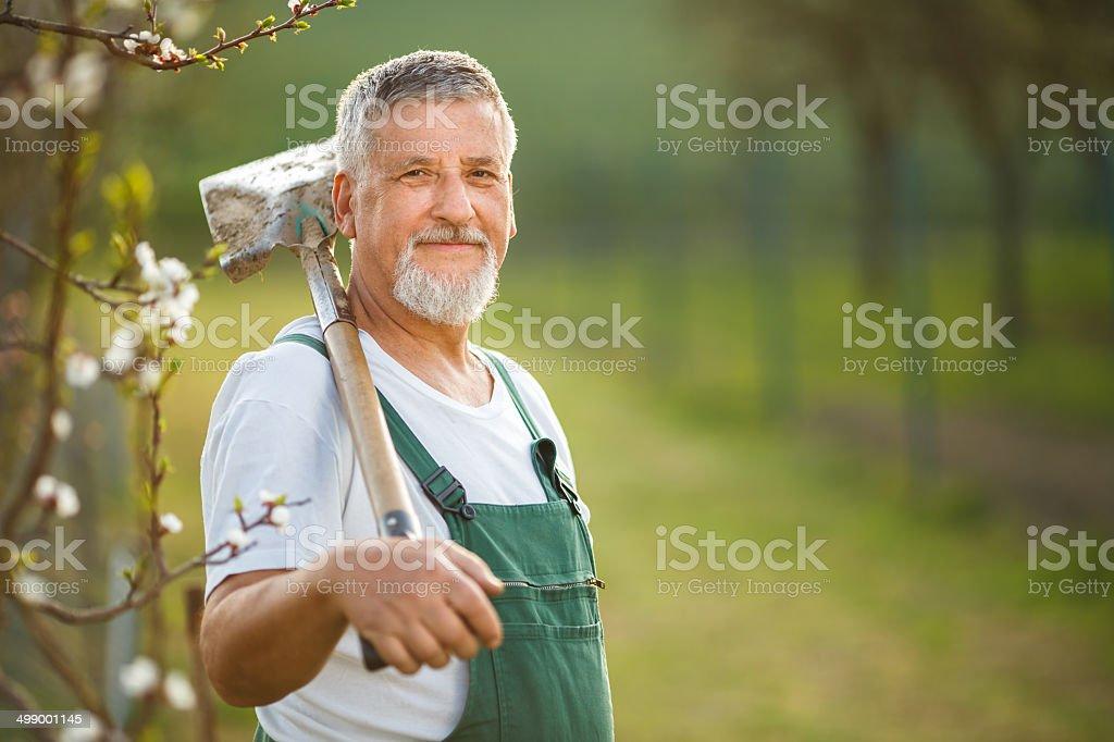 Portrait of a handsome senior man gardening stock photo