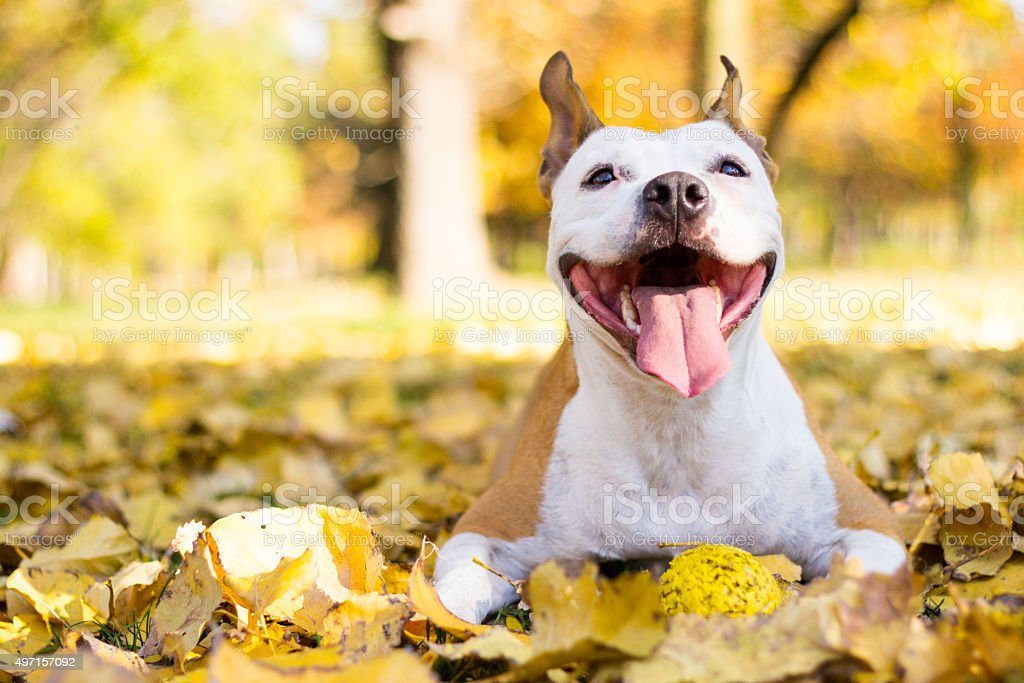 Portrait of a happy dog stock photo