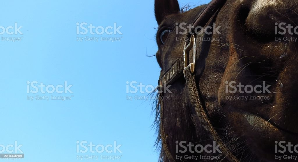 portrait of a horse on a background of blue sky stock photo